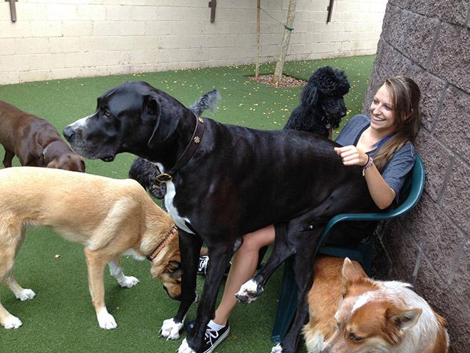 девушка в окружении собак