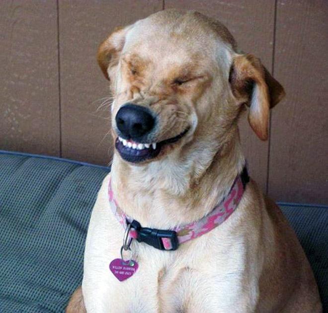 пес чихнул