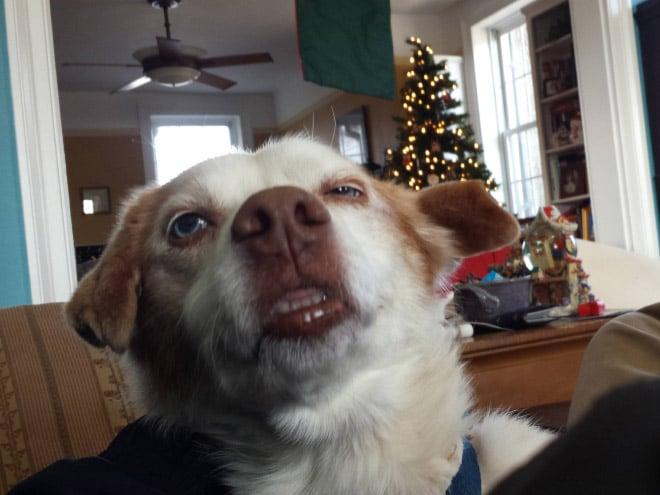 собака чихнула