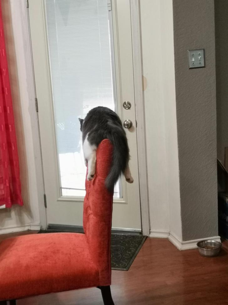 кот лежит на спинке стула
