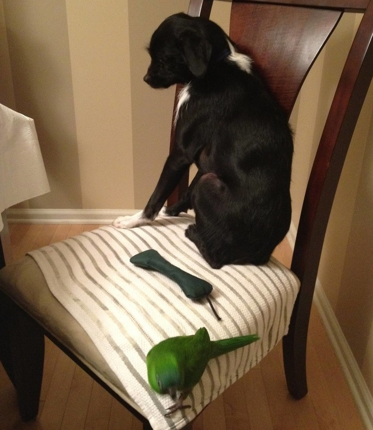 собака и попугай на стуле