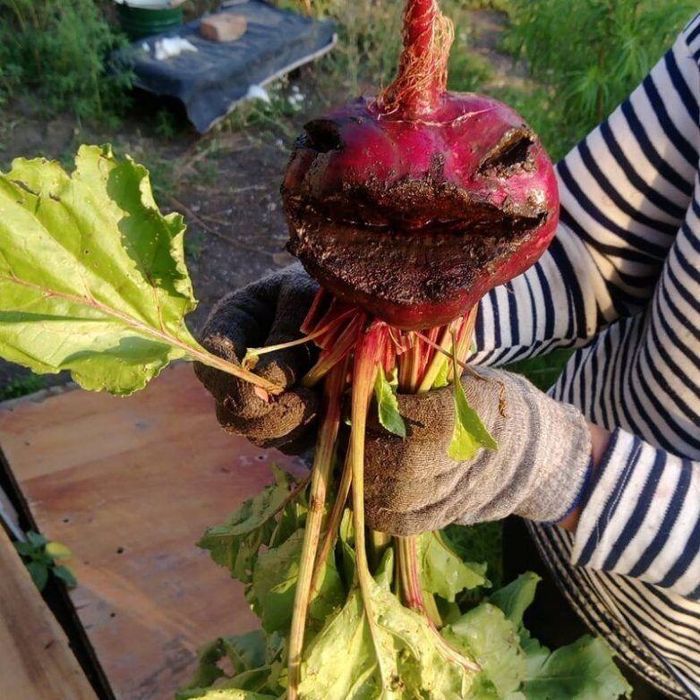 20 свидетельств того, что овощи начали эволюционировать
