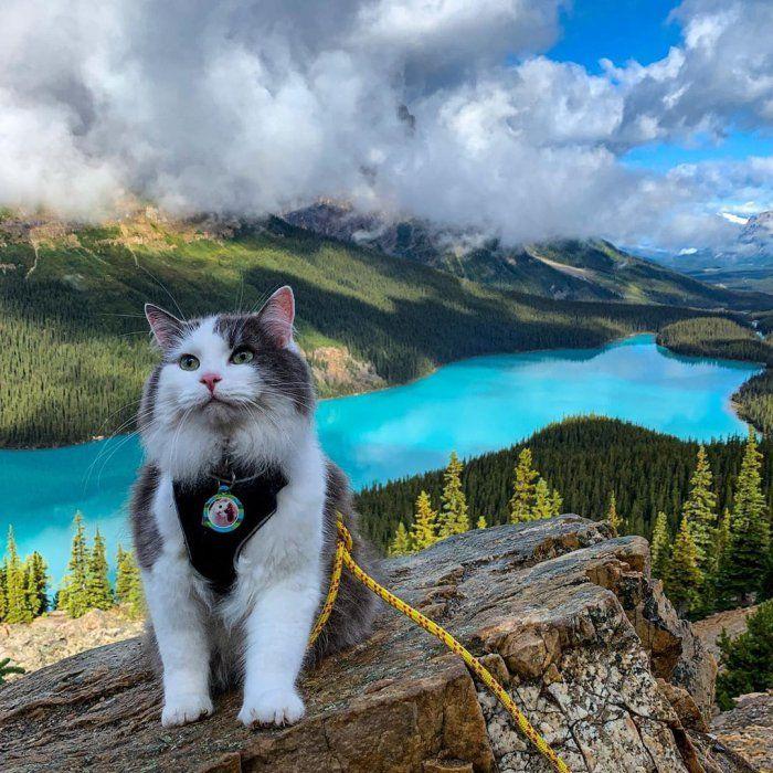 канадский путешественник (14).jpg
