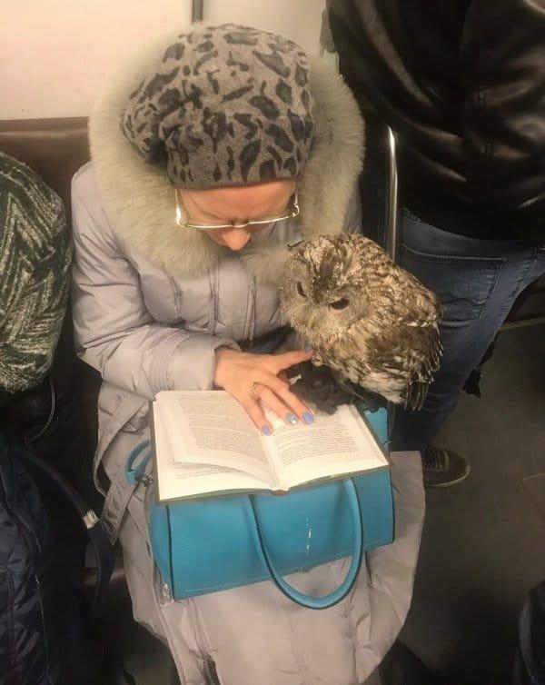 бабушка с совой
