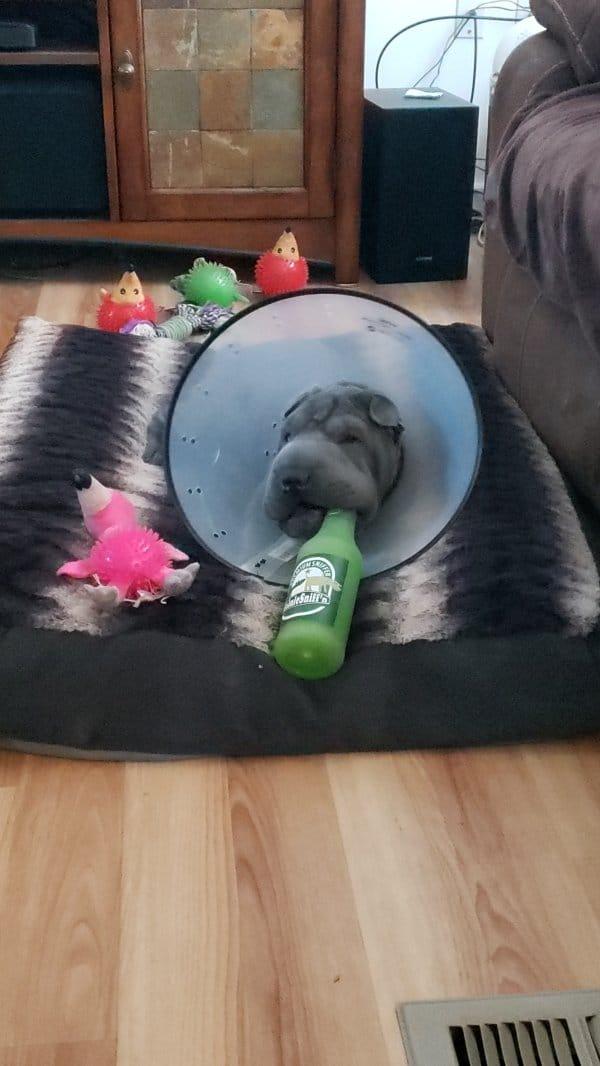 пес и игрушки
