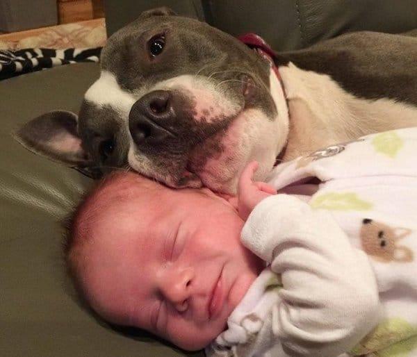 пес и младенец