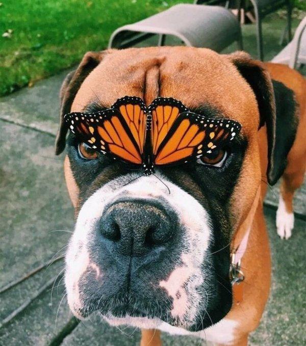пес и бабочка