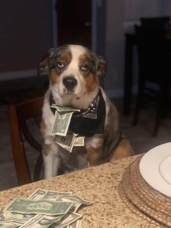 пес и деньги