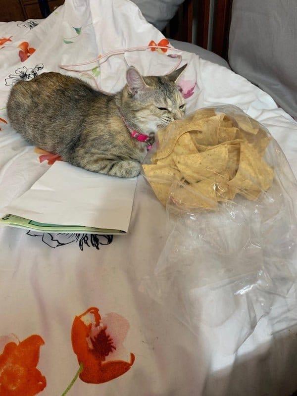 кот и чипсы