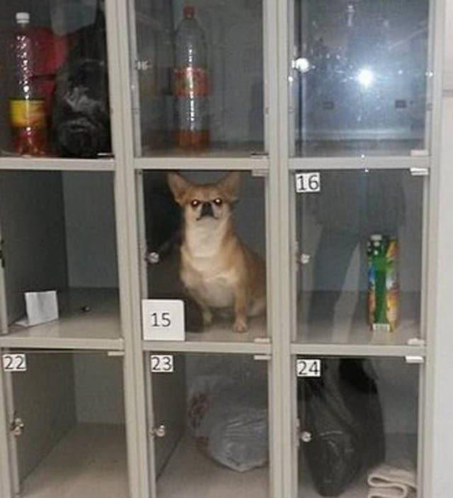 пес в камере хранения