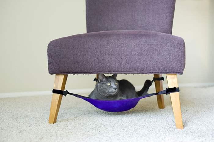 кошка сидит под креслом