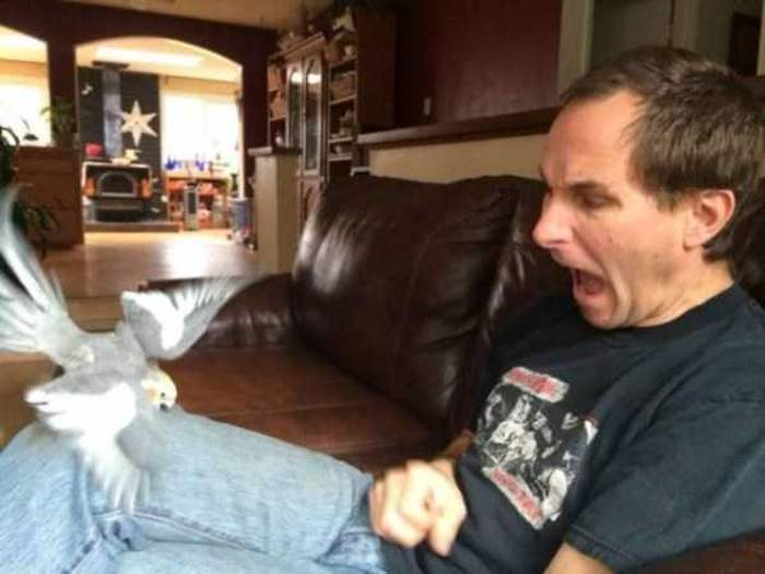 попугай клюет мужчину