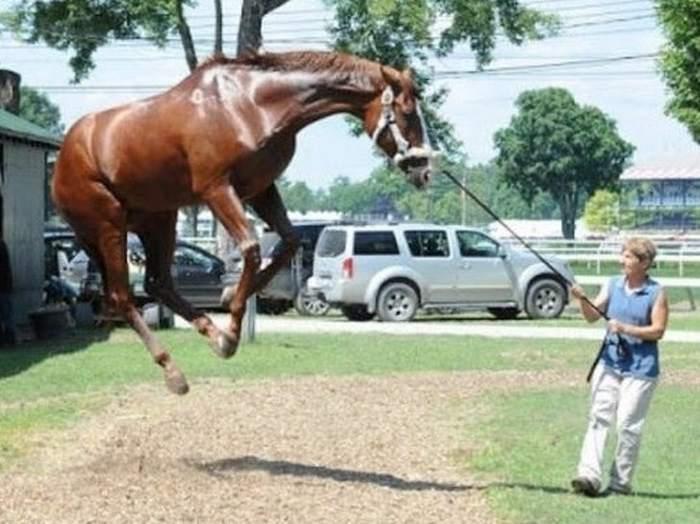 женщина держит лошадь за веревку