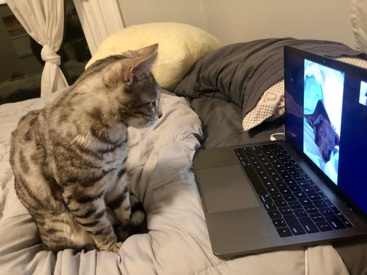 кот сидит рядом с ноутбуком
