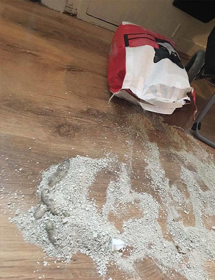 кошачий песок на полу