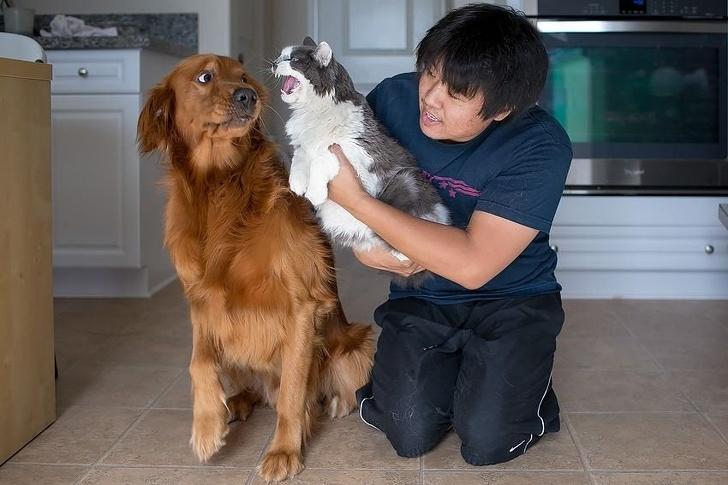 парень держит кота возле собаки