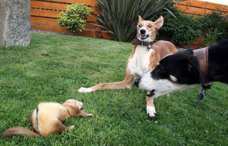 собаки боятся