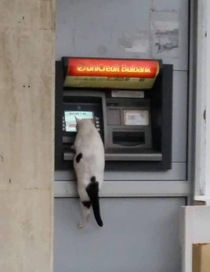 кот висит на банкомате