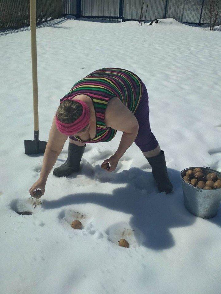 садить картошку