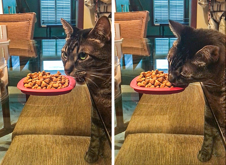 кот ест корм за столом