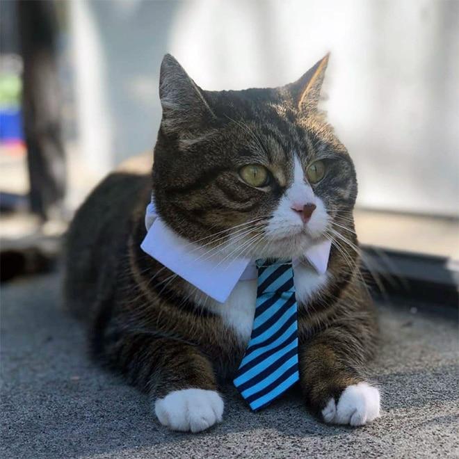 полосатый кот в полосатом галстуке