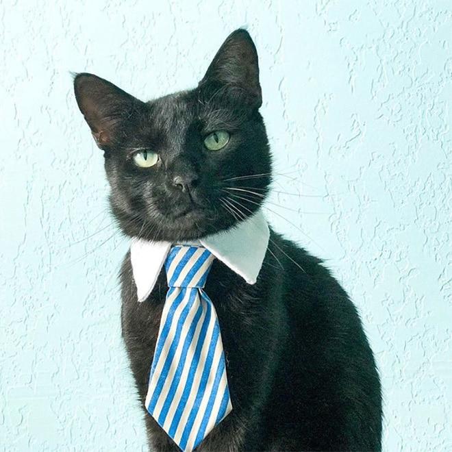 черный кот с голубым галстуком