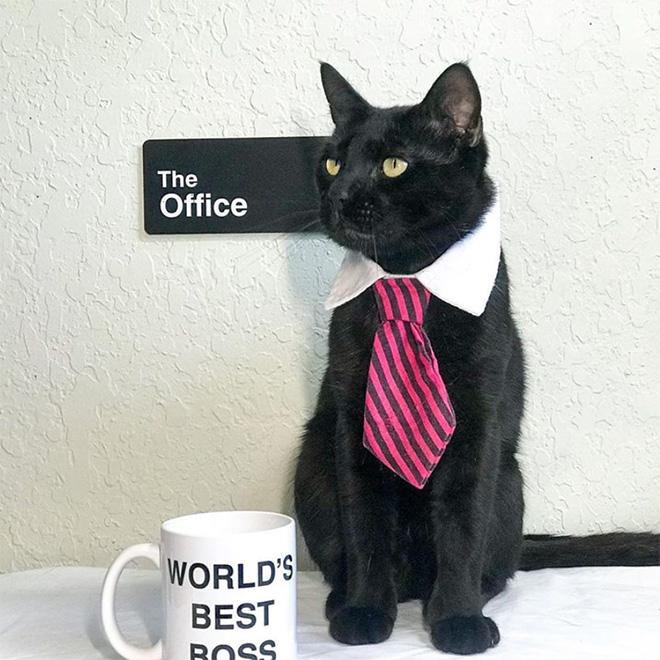 черный кот в галстуке