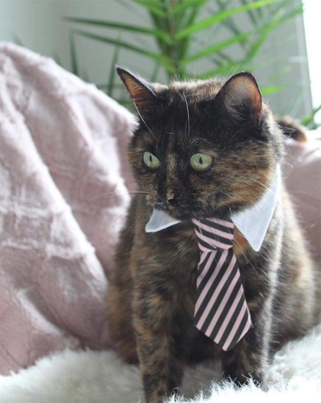 серый кот в полосатом галстуке