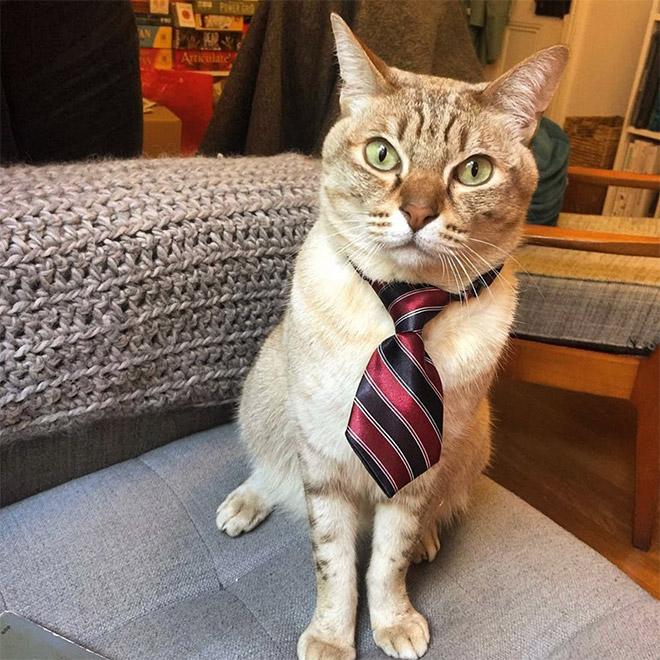 кот в полосатом галстуке
