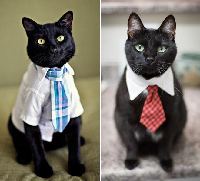 черный кот в рубашке и галстуке