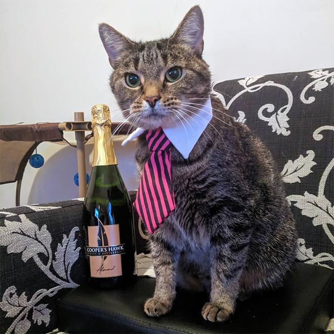 кот в галстуке и шампанское