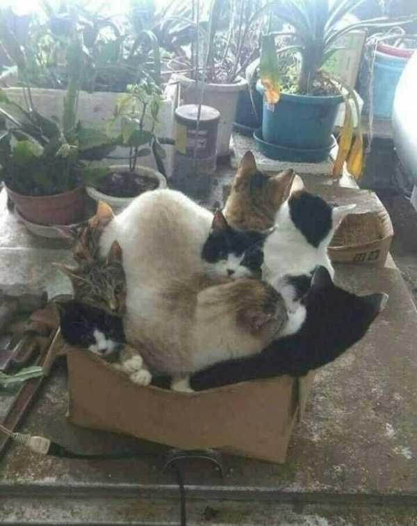 коты сидят в одной коробке