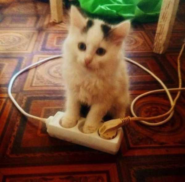 белый котенок сидит возле тройника
