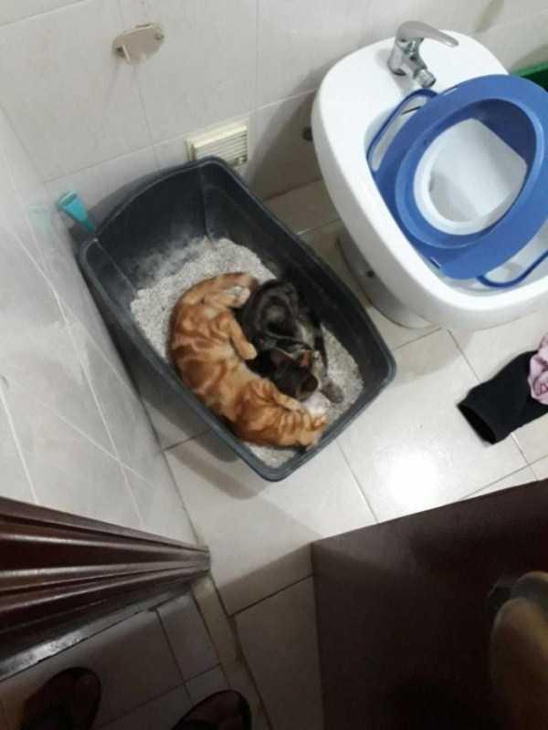 коты спят в лотке