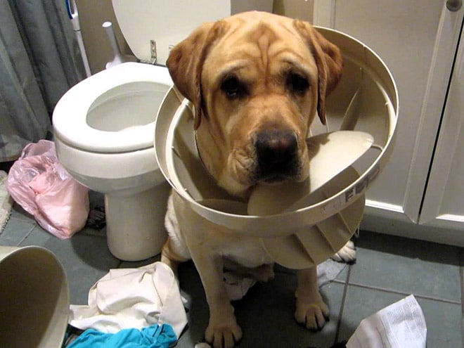 пес в туалете