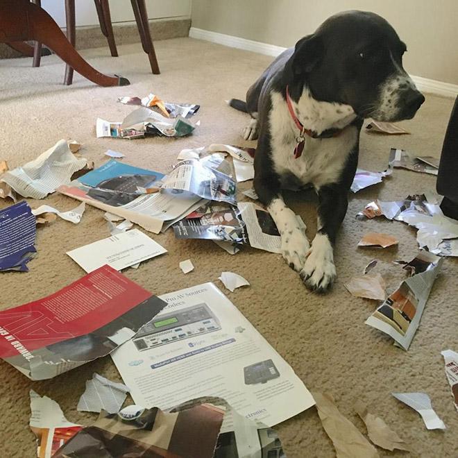 пес и бумага