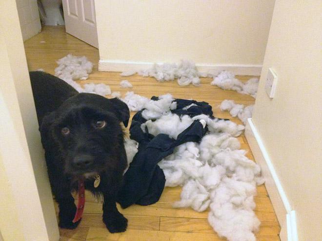 собака и подранная подушка