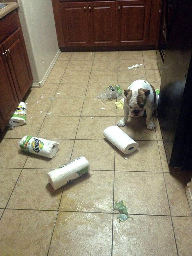 пес на кухне