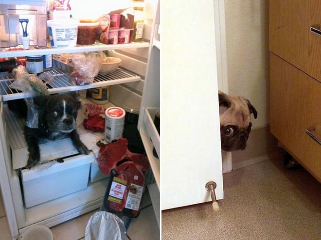собаки и холодильник