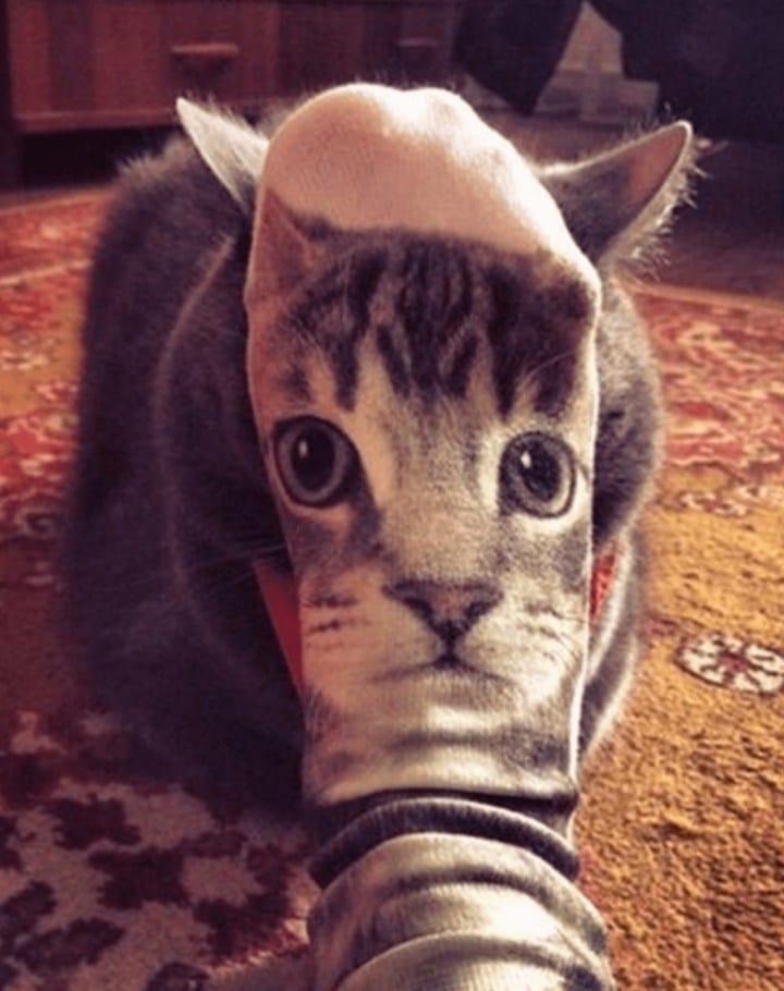 кот и носок