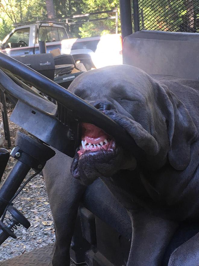 забавный пес