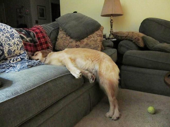 собака и диван