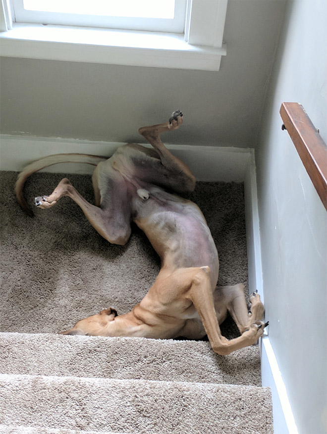 собака и лестница