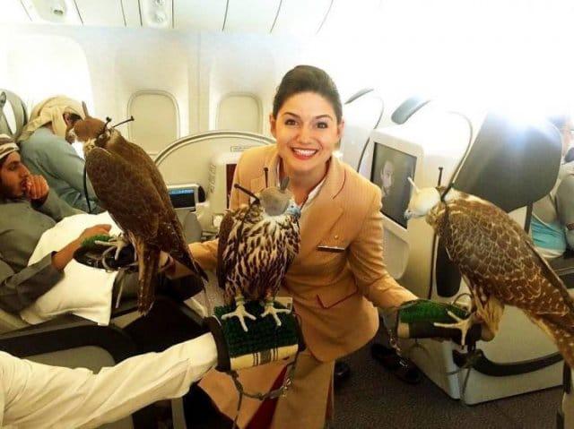 девушка с ястребами в самолете