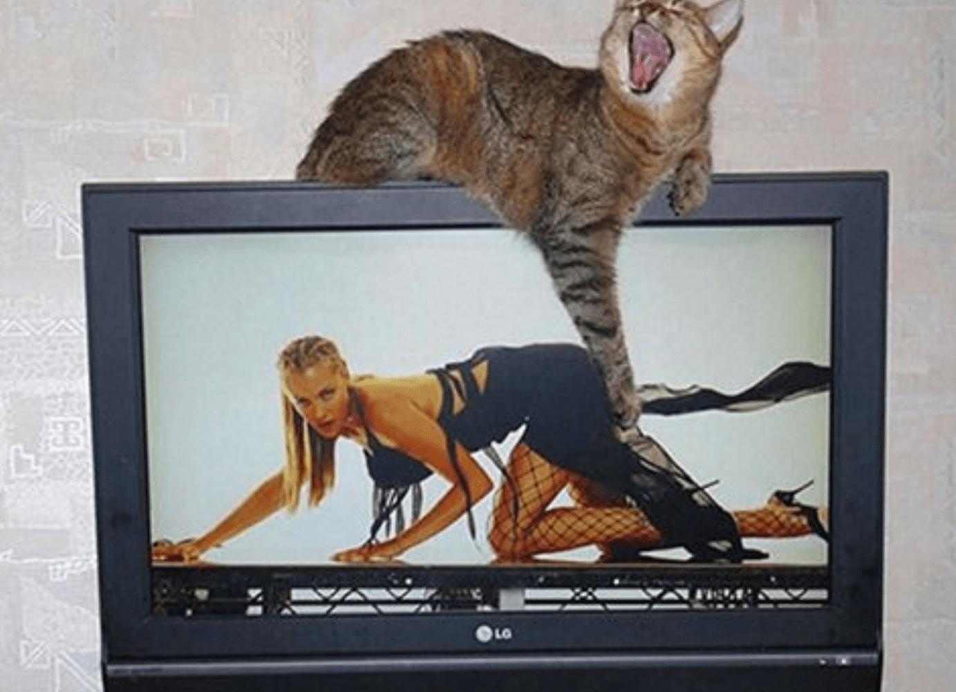кот на телевизоре