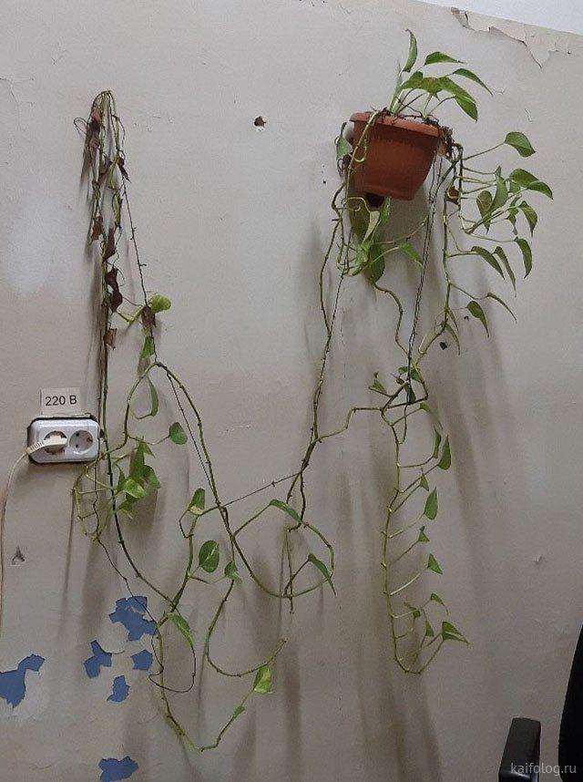Адские комнатные цветы (40 фото)