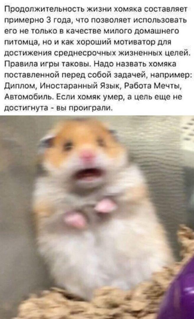 interneta-prostorov-idei-citaty-vkontakte-vkontakte-smeshnye-statusy