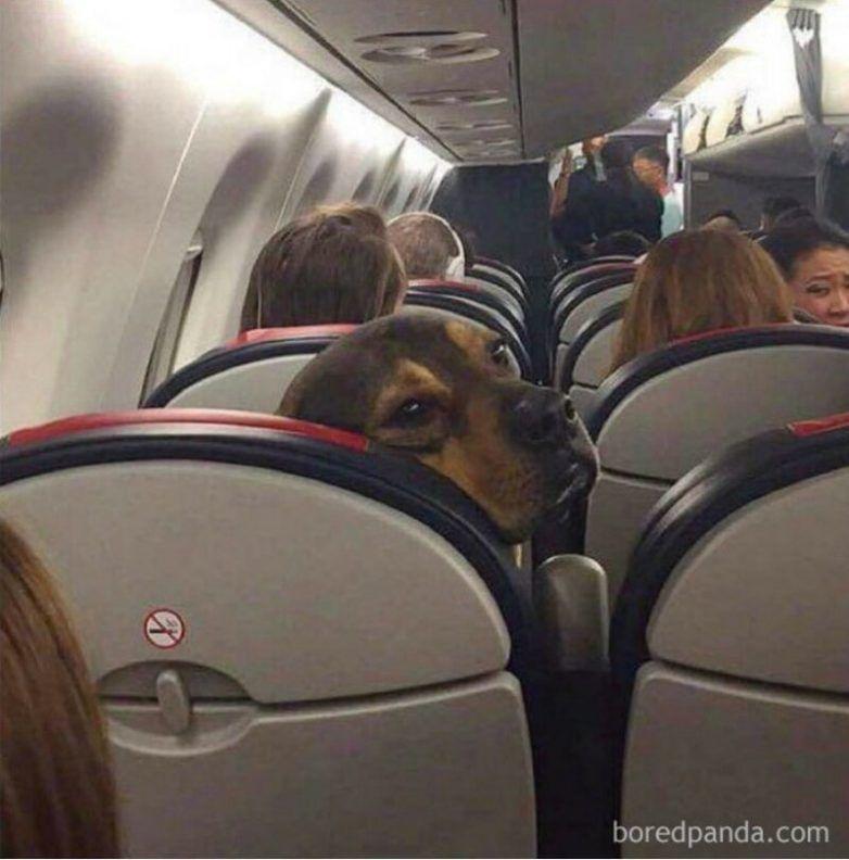 Приколы, которые поймет только тот, кто летал на самолетах