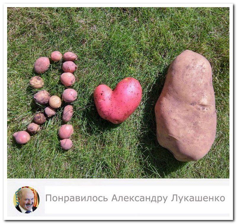 183090_11_trinixy_ru.jpg