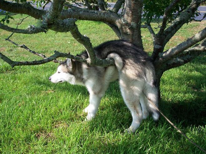 собака застряла на ветке